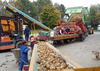onze boerderij aardappeloogst