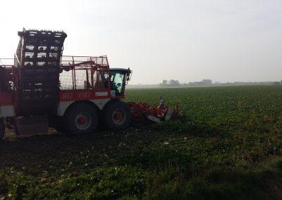 onze boerderij suikerbieten